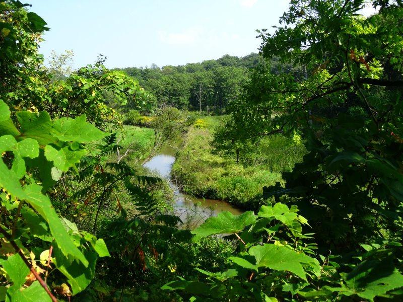 Hendrie Park Valley