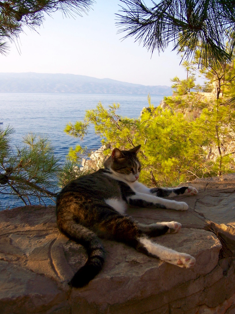 Hydra, Greece cat