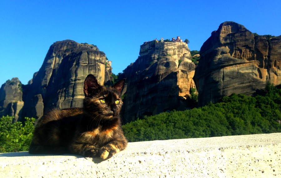 Cats Around the World: From Morocco to Bali