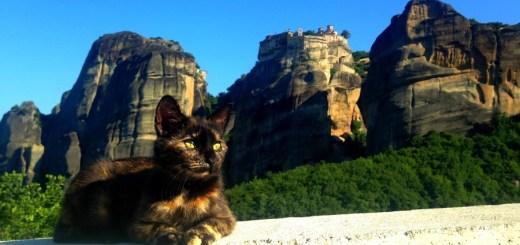 Meteora cat