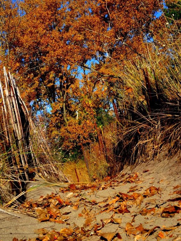 Toronto Islands sand dunes