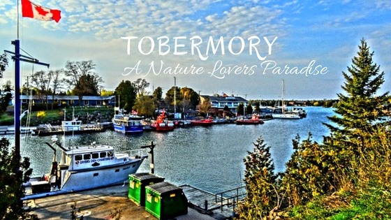 Tobermory Guide: A Nature Lovers Paradise