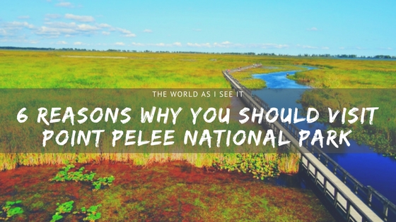 Why You Should Visit Point Pelee National Park
