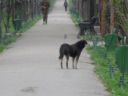 Stray dogs in Cismigiu park, Bucharest