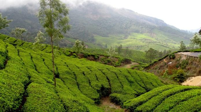 Views of Munnar tea plantations