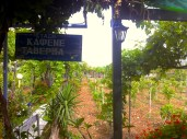 Restaurant is surrounded by olive trees, growing vegetables, and hens, running around freely