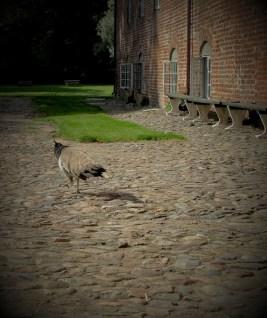 Chamaleonized inhabitant of the Voergård Castle in Denmark