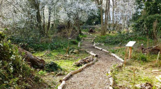 Ladywell Fields User Group AGM: Tuesday 31st March 2015