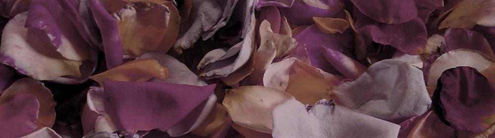 Pétalos de rosa como ingrediente de cosmética natural