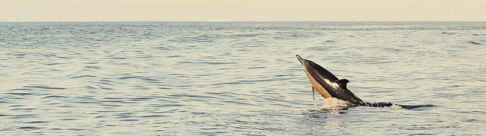 Foto de Costurilla: https://costurillahandmade.blogspot.com.es/