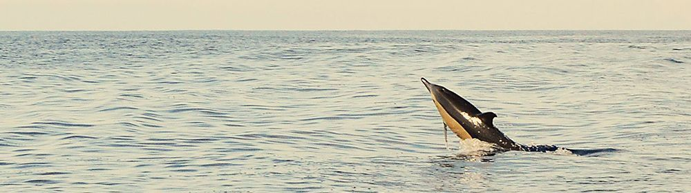 Foto de Costurilla: http://costurillahandmade.blogspot.com.es/