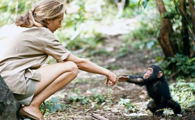 Jane Goodall - Gombe