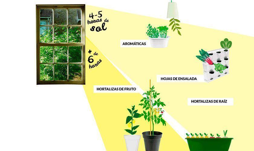 5 consejos para comenzar un huerto en casa. La luz