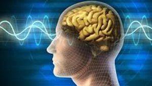 Científicos diseñan sustancias capaces de aumentar la memoria en el cerebro