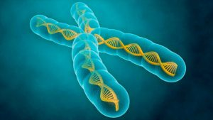Descubren cómo matar el cancer envejeciendo células malignas