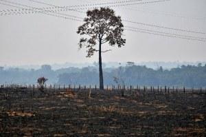 """Video: Avanza el gigantesco incendio que devora la selva amazónica en Brasil; Francia pide a potencias salvar el """"pulmón"""" del mundo"""""""