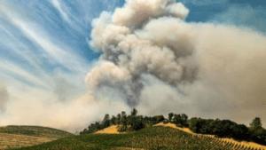Trabajadores agrícolas, entre calor, humo y coronavirus