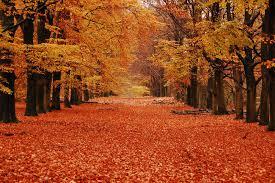 imagen de otoño