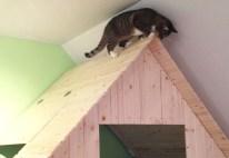 Sogar unsere Katze ist von der Himbeerlounge begeistert und steigt ihr hin und wieder aufs Dach.