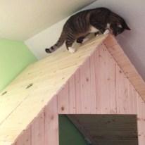 Sogar unsere Katze ist begeistert und steigt ihr hin und wieder aufs Dach.