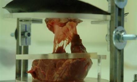 El corazón que se fabrica en el laboratorio.
