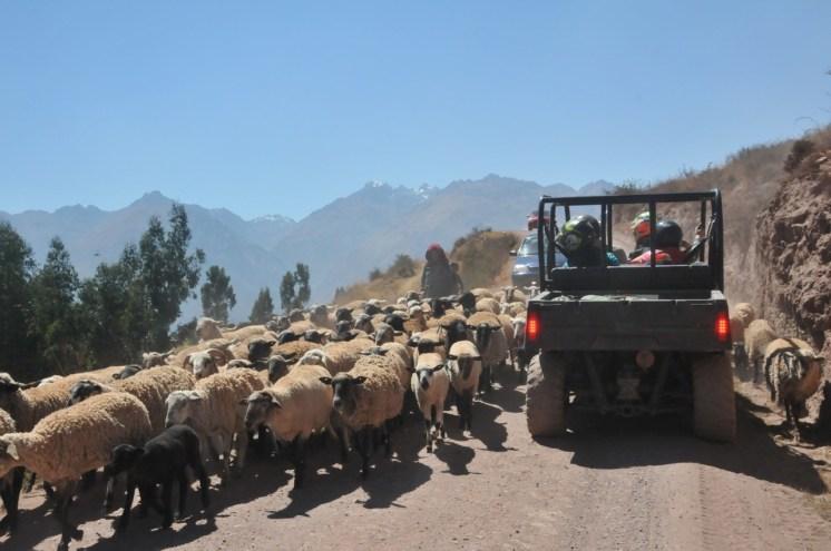 viajar-a-cusco-en-familia-guia-datos-34
