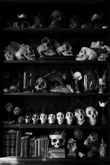 Cabinet-de-curiosités-crânes