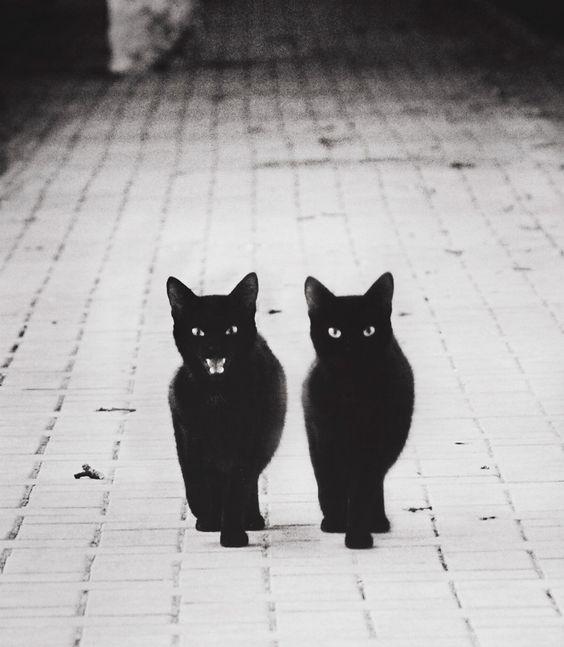 Deux-chats-noirs