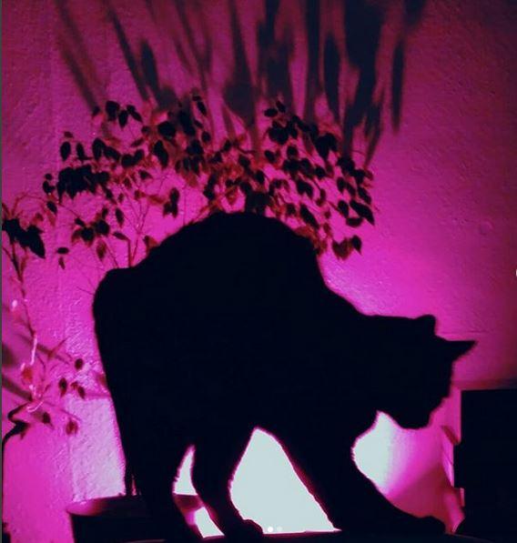 Mon-chat-calin