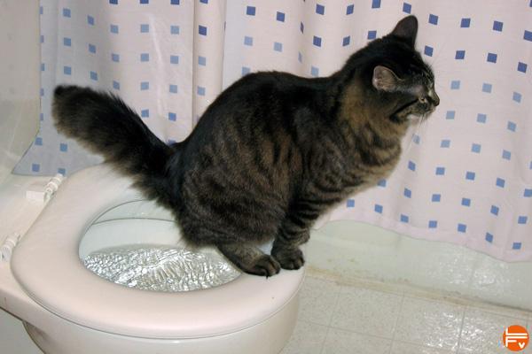 cat-pissing