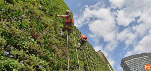 green-climbing-gear