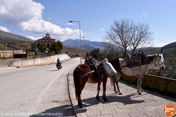 Albanie, deux mules au bord d'une route