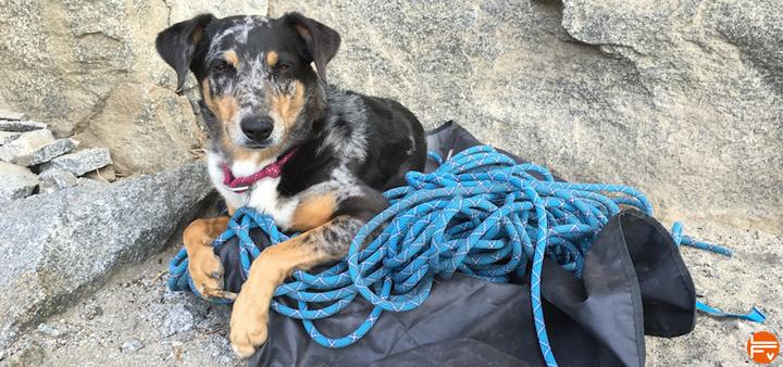 crag dog acceptable or not climbing