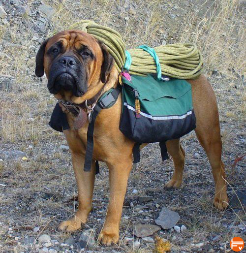 crag dog climbing