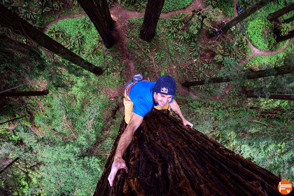 chris-sharma-free-climbs-huge-tree