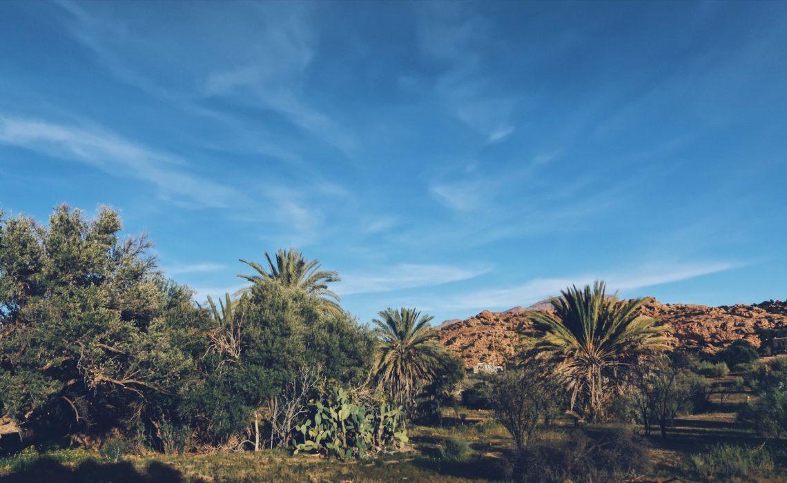La palmeraie de Tafraout