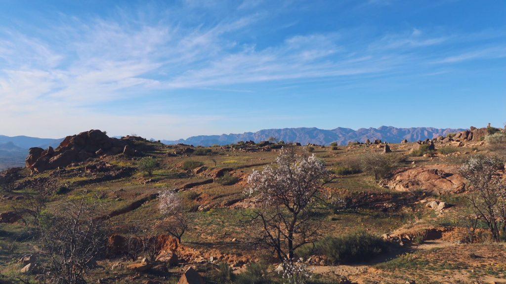 Voyage au Maroc amandiers autour de Tafraout
