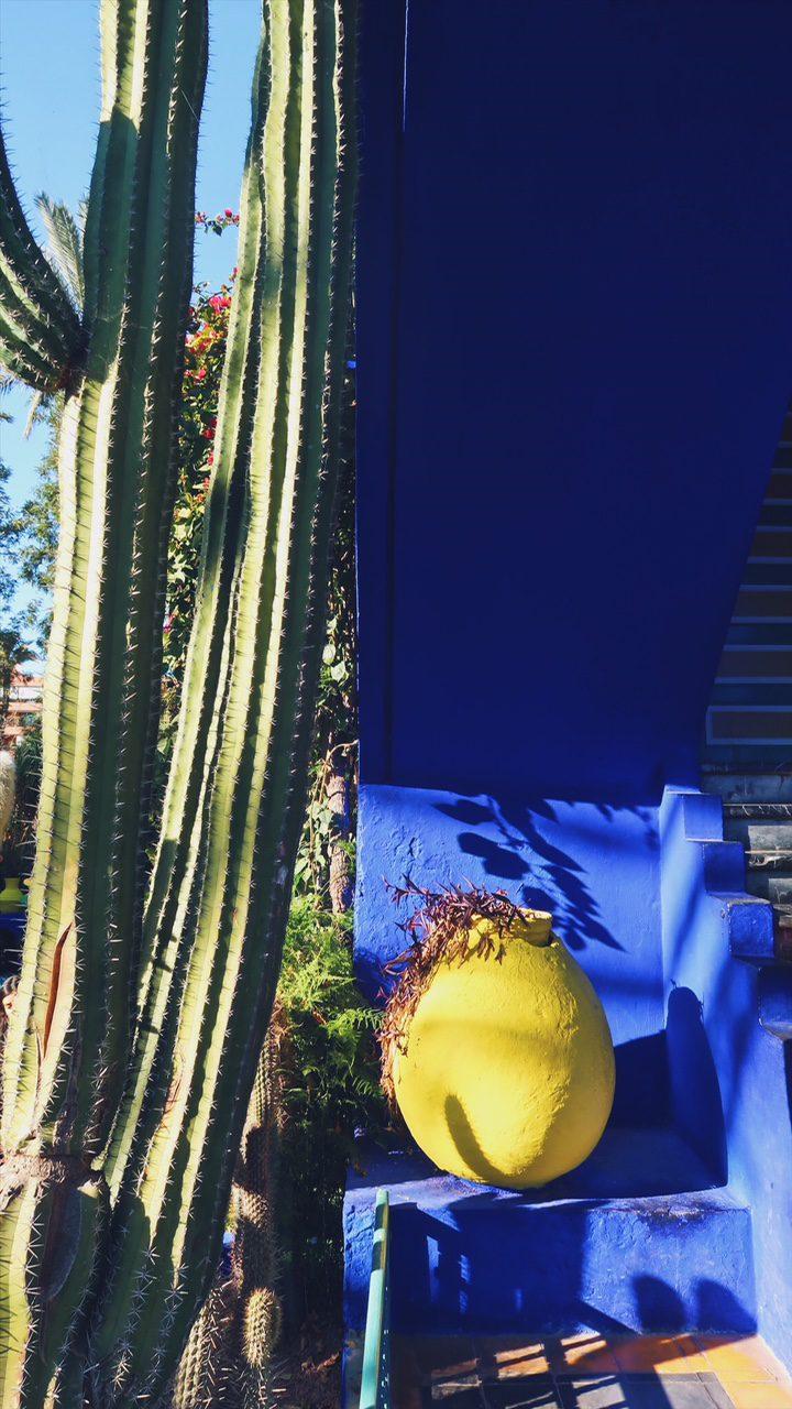 Voyage au Maroc Marrakech bleu, jaune et vert du jardin majorelle