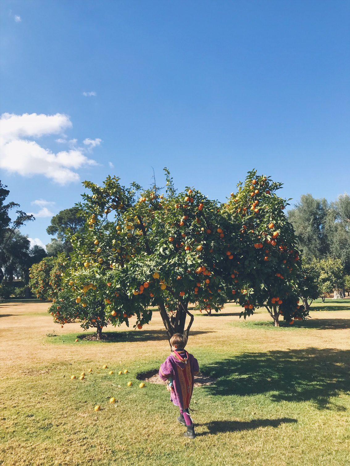 Voyage au Maroc Marrakech jardin de La Mamounia oranger