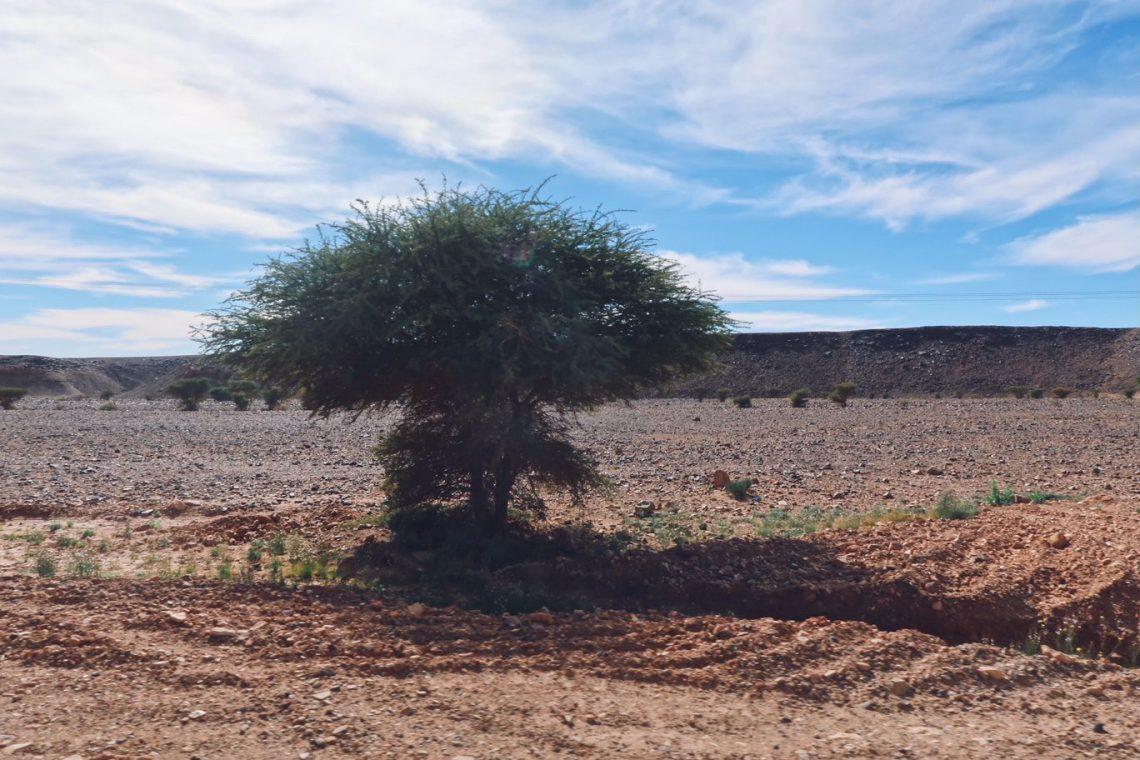 Voyage au Maroc Desert Sahara Erg Chegaga acacia