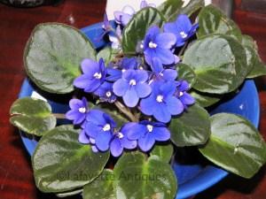 bowl_violet