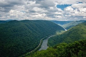 Forest Bathing in the New River Gorge