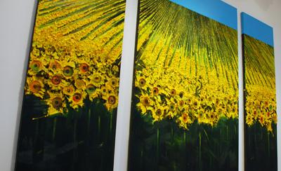 Sebastion Horsley Daffodils