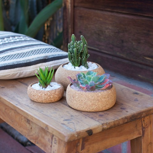 All_corkplanter-melanieabrantes.com-lafemmedubucheron