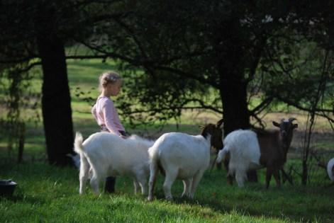 Golf paysan - activité normandie - en famille
