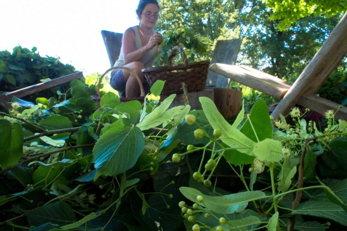 Tisane bio artisanale du Limousin - paysan herboriste