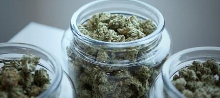 HempStreet - Delhi's Cannabis-based Ayurveda medicare provider raises $1 Mn