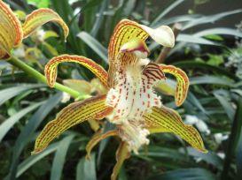 Une orchidée présentée à Mille et Une Orchidées