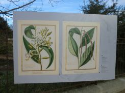 Aperçu de l'exposition Orchidées sur vélins
