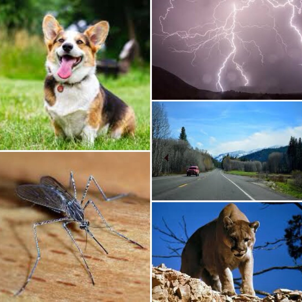 Images: Clockwise from top left a) dogs b) lightning c) cars d) mountain lion e) insects (see below for the answer)